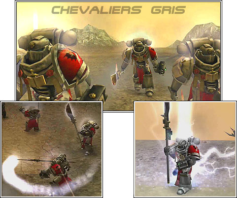 Chevaliers gris